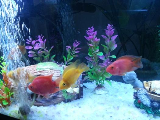 My Parrots...my babies! :-)