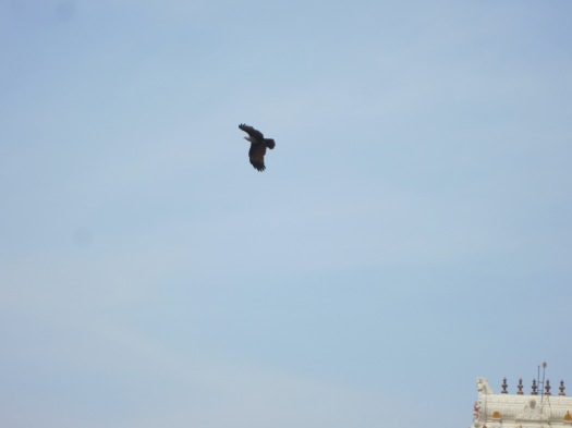 Garuda, The Eagle