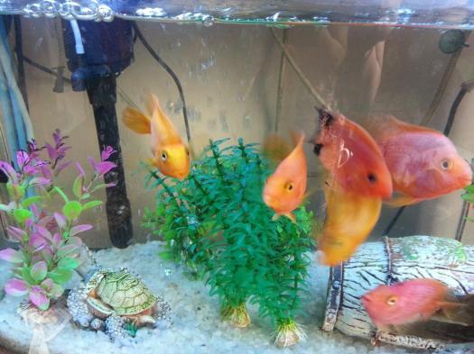 My Parrots!