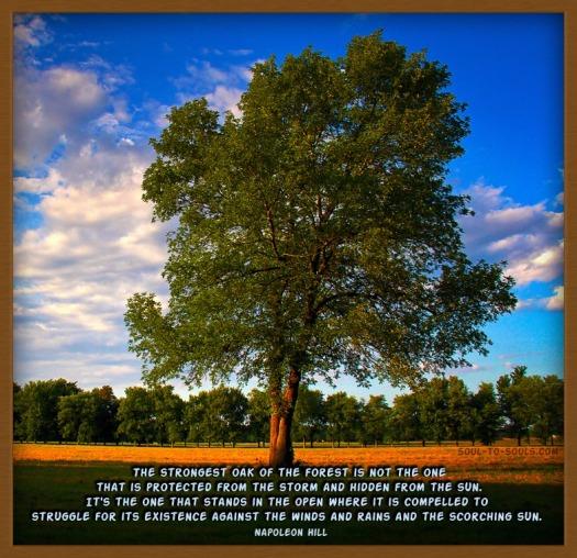 Strongest Oak